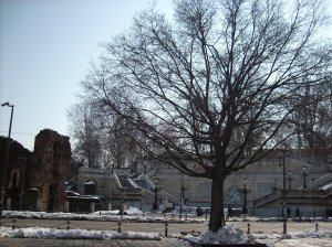 Bare tree and street