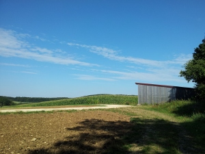 Farmland, blue skies, sunshine, ahhhh.