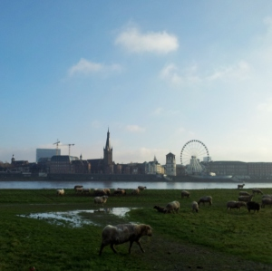 Perth doesn't have sheep grazing on the banks of its river. Dusseldorf does.