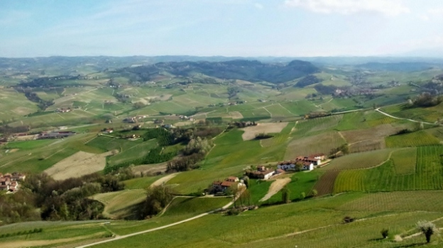 Hills in Barolo