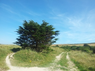 Tree and farmland in Cornwall
