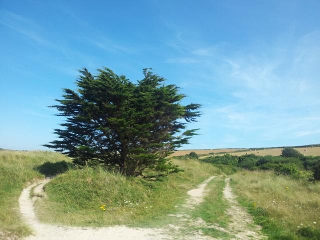 Tree and farmland in Cornwall