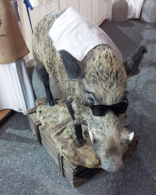 Taxidermy boar wearing sunglasses